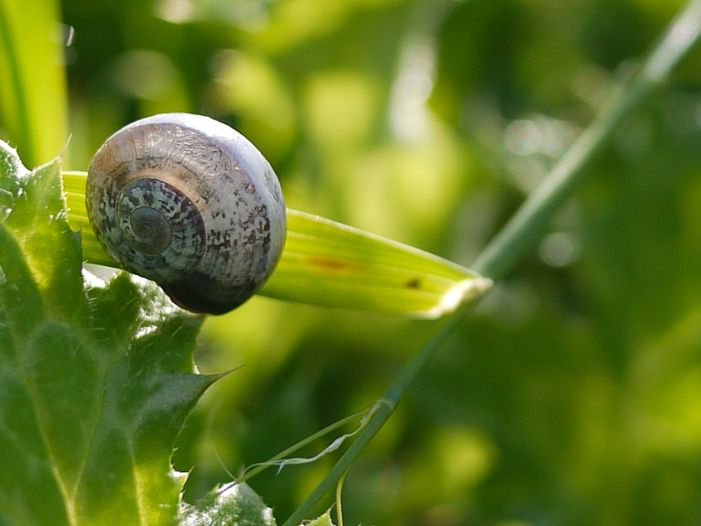 march 2011 snail shell